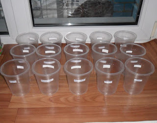 Подписываю стаканчики под рассаду баклажанов
