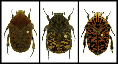 "The scientist named three types of beetles in honor of dragons from the ""Game of Thrones"""