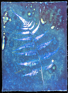 Wet Cyanotype_Sue Reno_Image 183