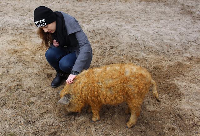 Shooting mit Schweinen