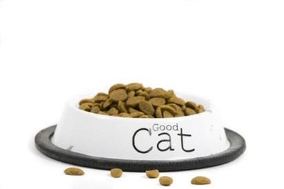 Jenis Makanan Kucing Persia Yang Tepat