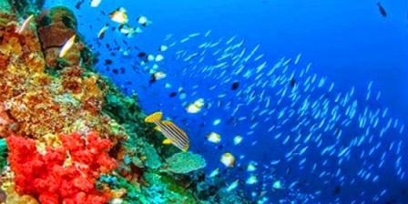 Taman Laut Bunaken taman laut bunaken berada di sulawesi utara taman laut bunaken di sulawesi utara taman laut bunaken terdapat di laut taman laut bunaken manado taman laut bunaken ada di sulawesi utara