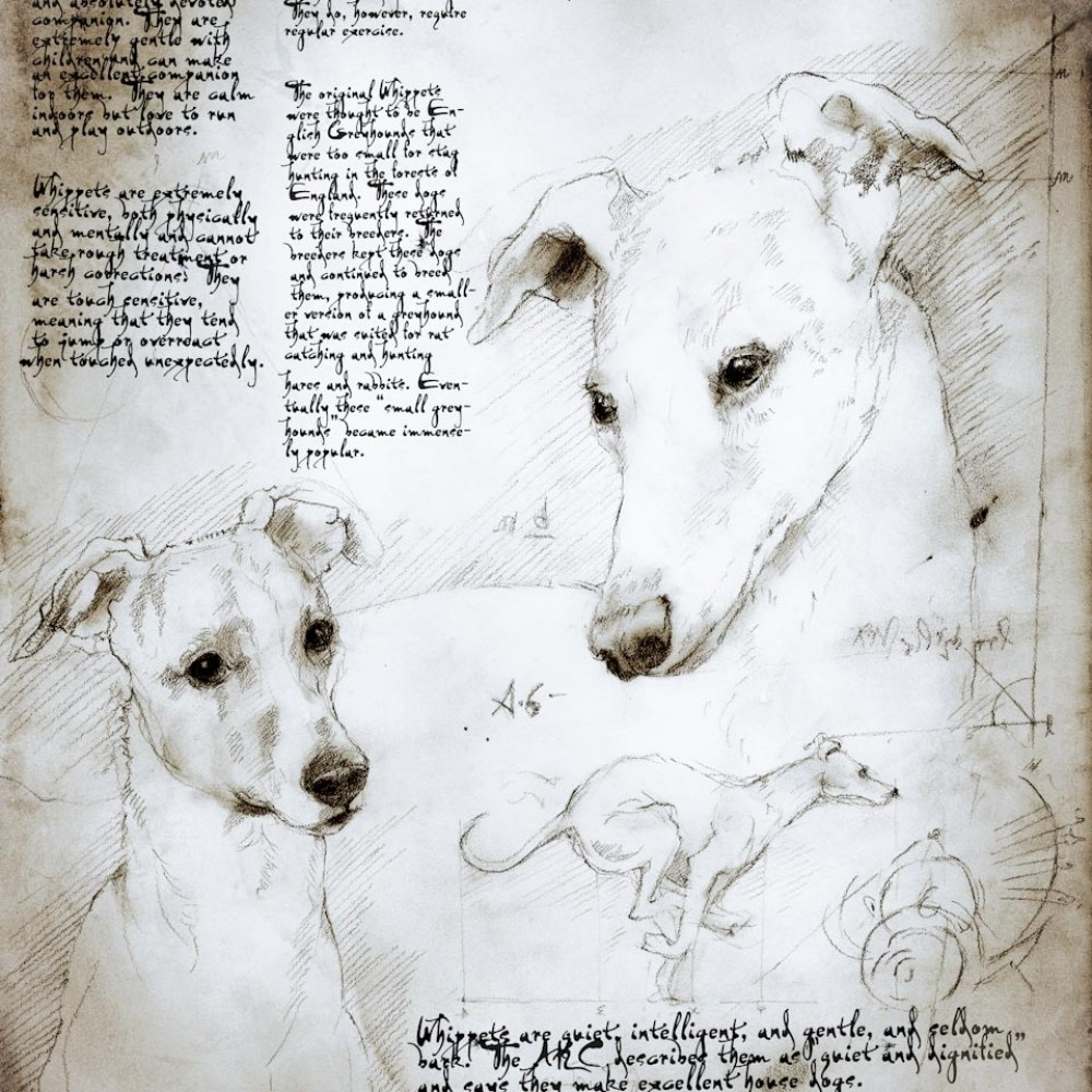 08-Whippet-Study-Leonardo-s-Dogs-Cats-and-Dogs-Drawn-in-the-style-of-Leonardo-da-Vinci