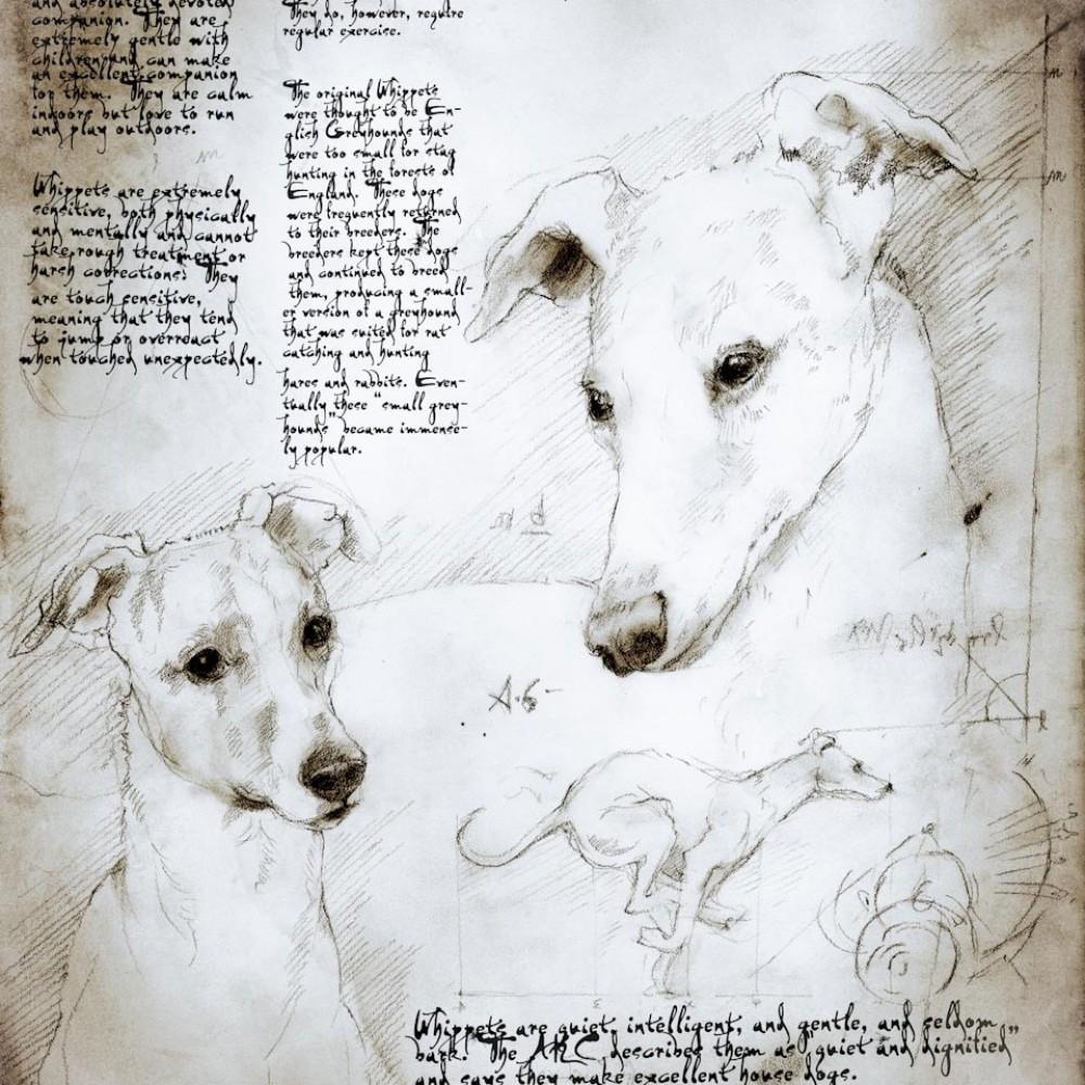 08-Whippet-Study-Leonardo-s-Dogs-Cats-and-Dogs-Drawn-in-the-style-of-Leonardo-da-Vinci