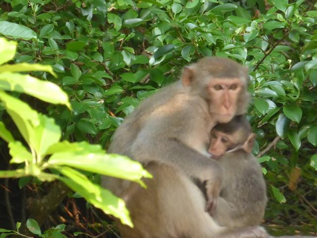 Mono en Monkey Island
