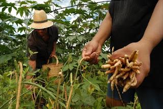 Agricultores do Seridó e Curimataú ficarão sem receber garantia safra devido atraso do estado