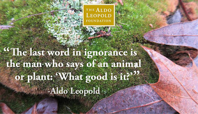 """The last word in ignorance is the man who says of an animal or plant, ""What good is it?"""