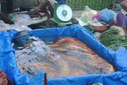 Peluang Buka Usaha Lapak Ikan Lele Nila Mas dan Patin