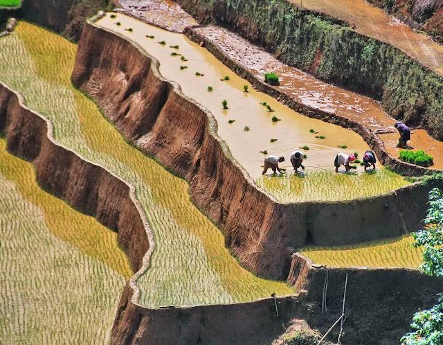 Nếu lên Hoàng Su Phì vào mùa lúa chín, bạn sẽ thấy nơi đây như một tấm thảm trải dải với màu vàng óng hay xanh mướt của lúa mới. Còn vào khoảng tháng 5 đến tháng 7, Hoàng Su Phì lại tựa nhưng một tấm gương khổng lồ phản chiếu mây trời, núi rừng Đông Bắc.