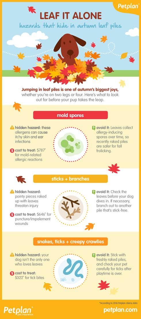 Fall hazards infographic