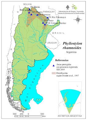 Palo lanza Phyllostylon rhamnoides