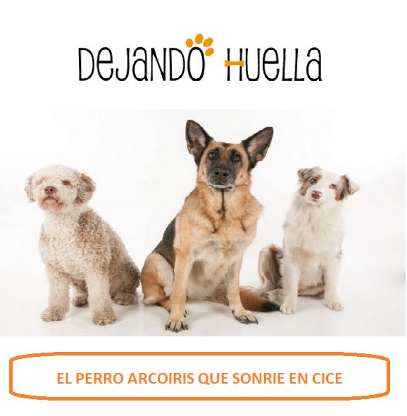 DEJANDO HUELLA . EMPRESA DE FORMACION DE PERROS