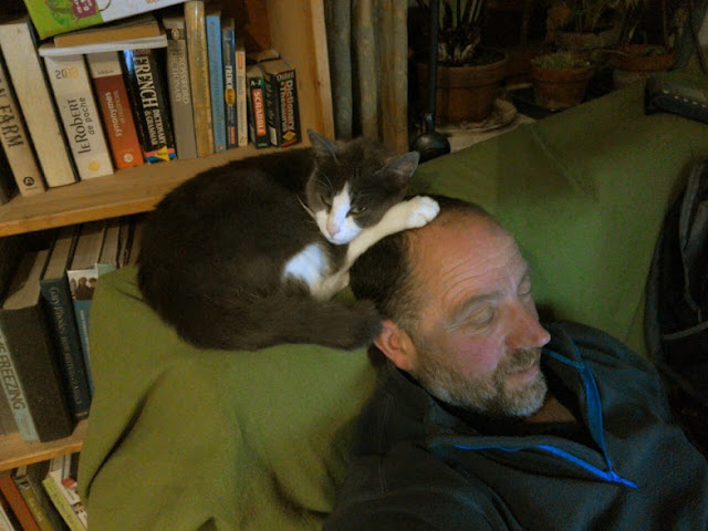 A cat sat on a man's head