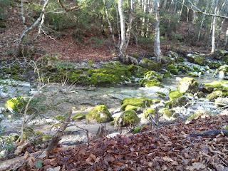 Belle surprise que ce ruisseau en sous-bois