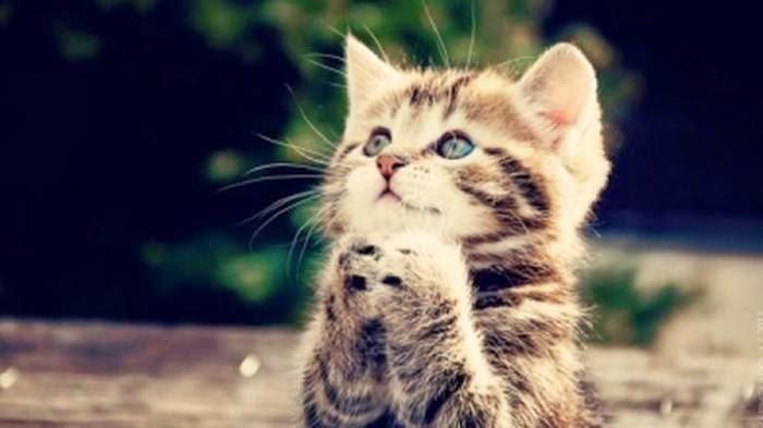 Kisah Seorang Wanita Masuk Neraka karena Kucing