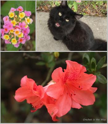 photography, cat, flowers, azalea, lantana, Florida, fall