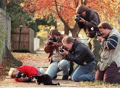 Gato fotografiado por varios fotógrafos.
