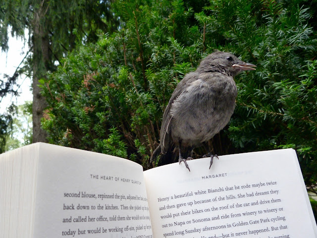 young catbird sitting on book