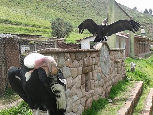Santuario Animal de Ccochahuasi