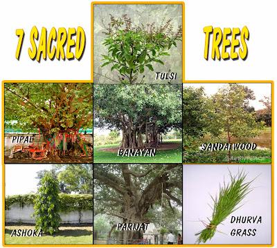 Image result for seven sacred  trees