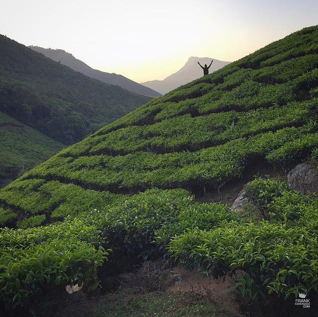 amanecer en campos de te en munnar kerala india
