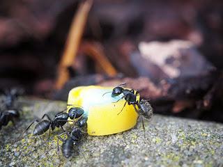 """Как победить муравьев на дачном участке/ Блог """"Дача-это просто!"""