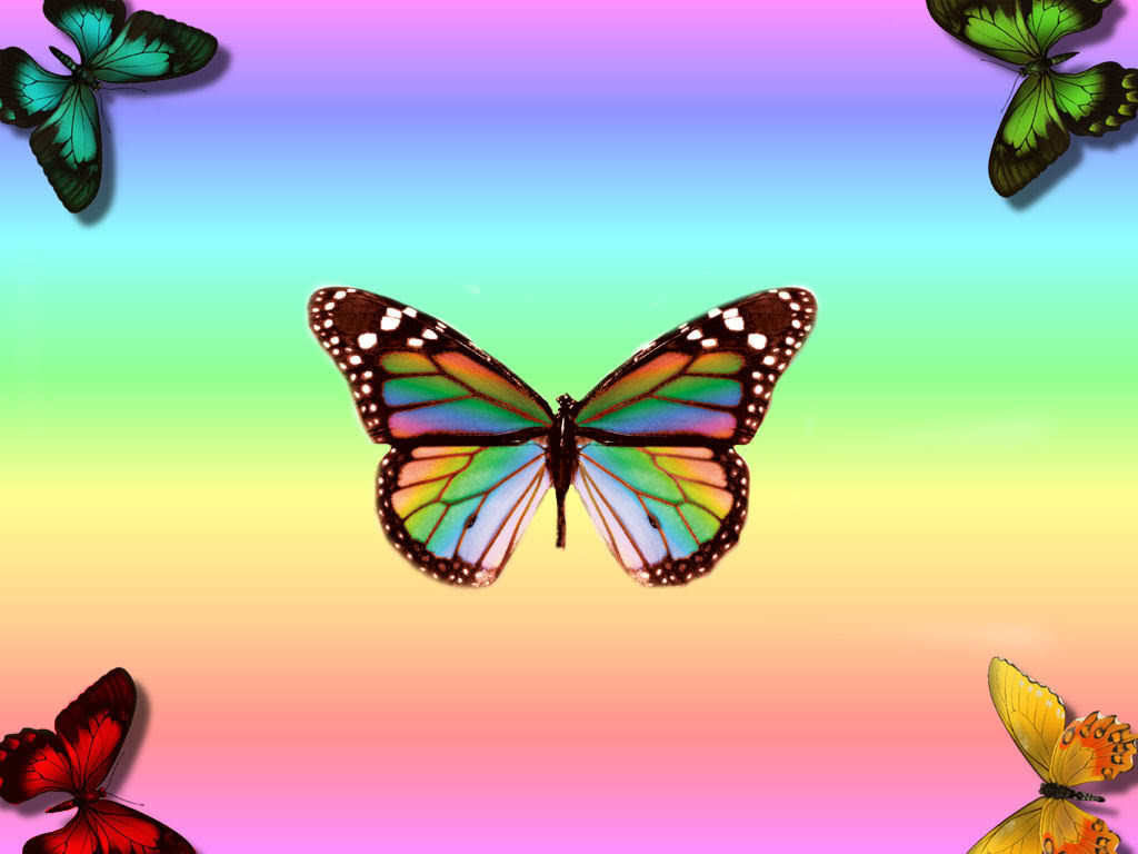 Rainbow Butterfly Background Wallpapers