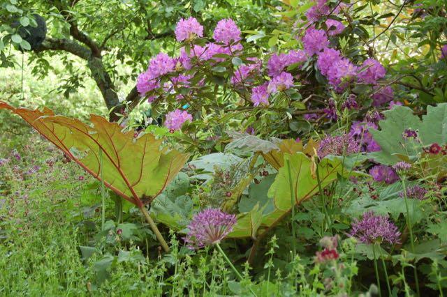 rododendron, allium en Rheum palmatum
