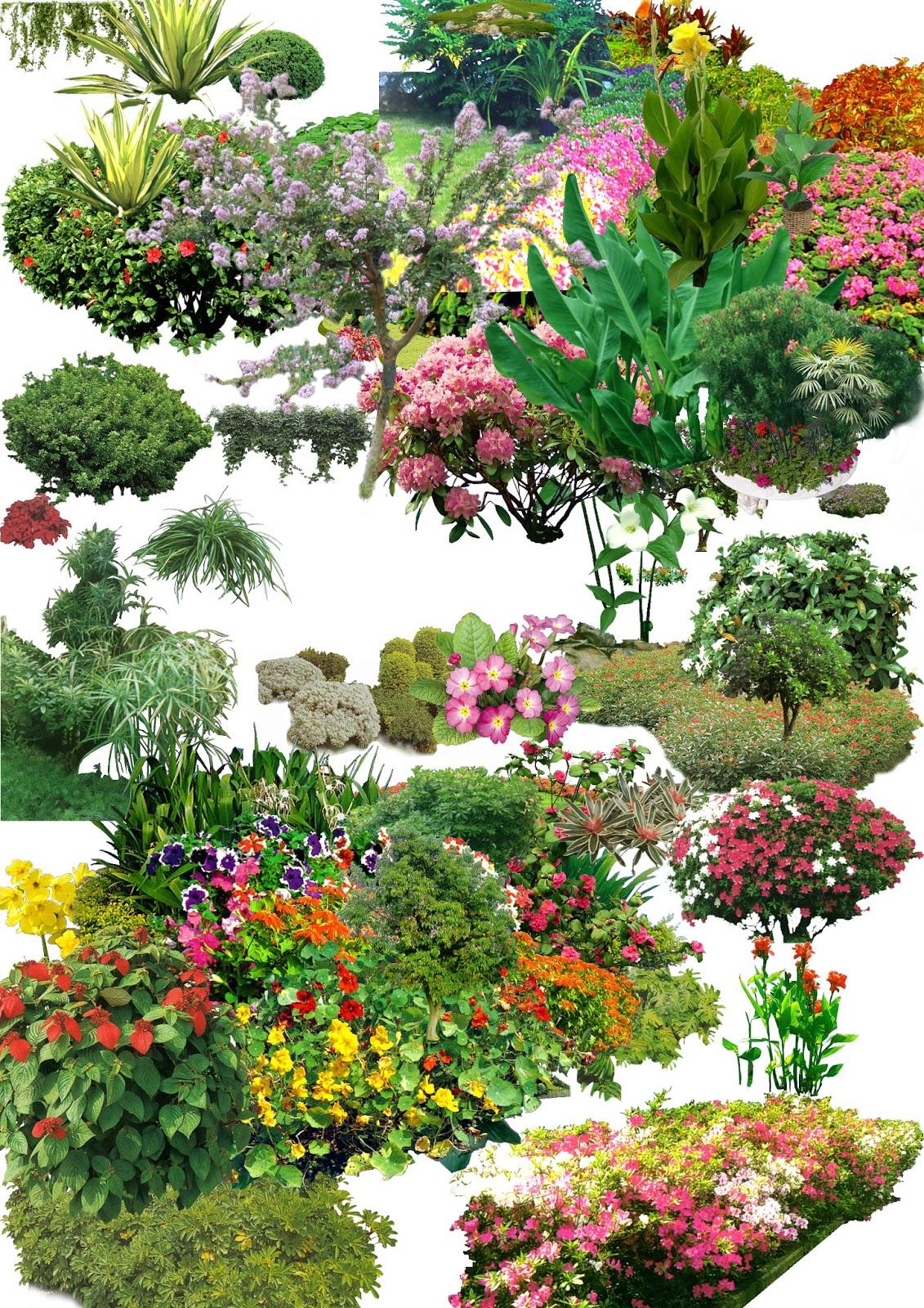 TREE PSD 01.psd (Khóm hoa, cây bụi cây có hoa)