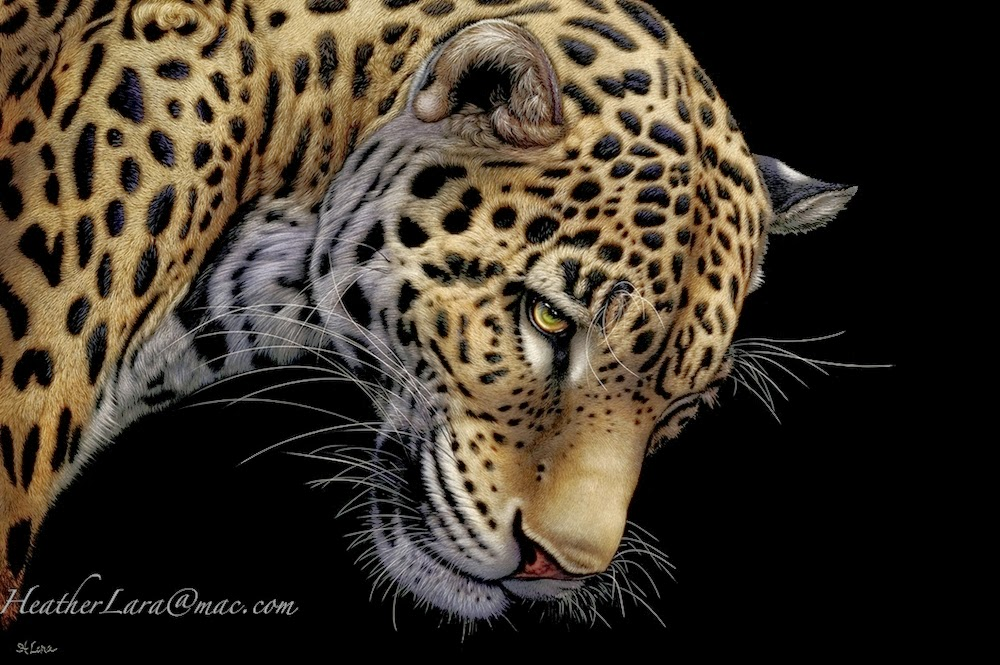 07-Jaguar-Heather-Lara-Hyper-realistic-Animal-Scratchboard-Drawings-Wildlife-www-designstack-co