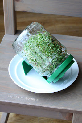 sprouted-broccoli-seeds