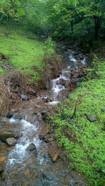 Pune, monsoon, lakes, waterfall