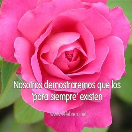 rosa rosa con frase