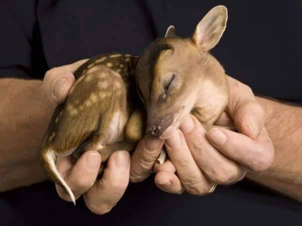 lindos%2Banimais%2Bbebe%2B%2B%252823%2529 - Os filhotes de animais mais lindinhos que você já viu!