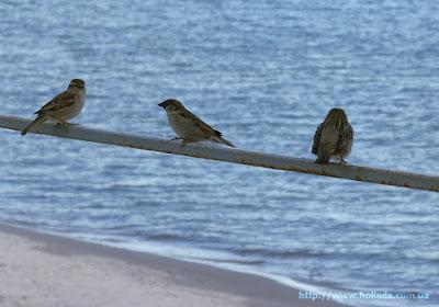 """Воробьи смотрят на море. Пляж """"Отрада"""", Одесса"""