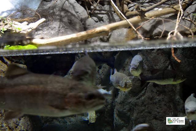 aquário de sevilha