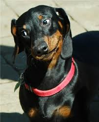 I Wouldn T Treat A Dog Tab