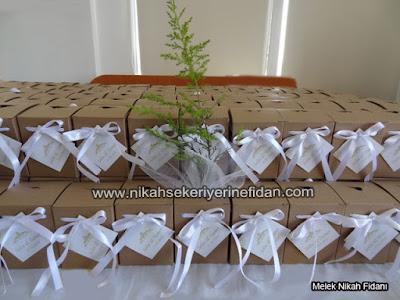 nikah fidanı Eskişehir Selin Tamer nikah çamı - 1