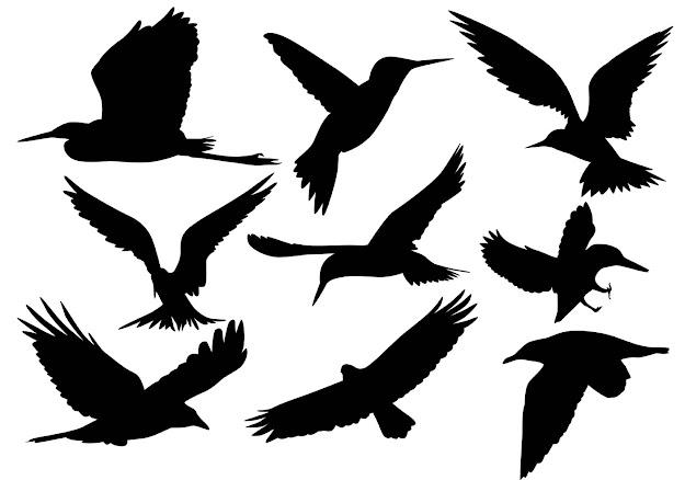 Flying Bird Silhouette Vectors