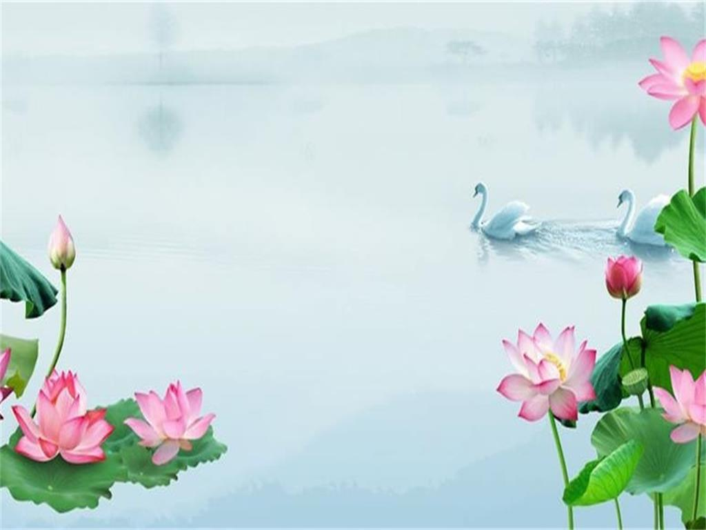 PPT background picture of lotus and swan