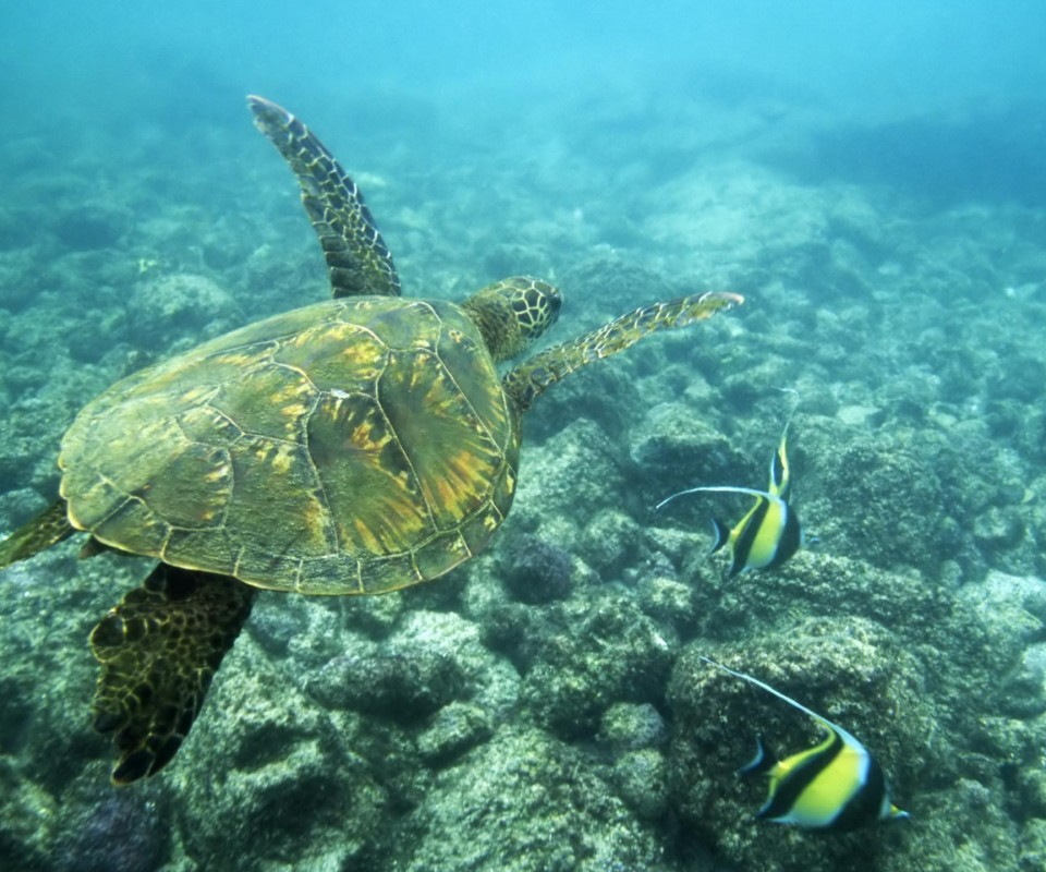 Funny 3d Animal Turtle Wallpapers Hd: Fun Animals Wiki, Videos, Pictures