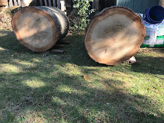 Our pin oak logs