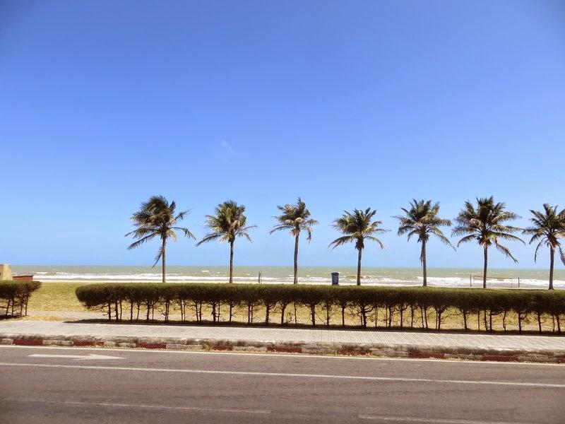 пальмы вдоль моря