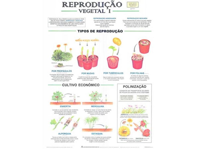 Reprodução Vegetal