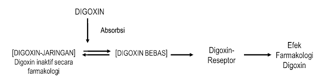 Interaksi Obat Pada Proses Distribusi (Interaksi Digoxin-Quinidin)