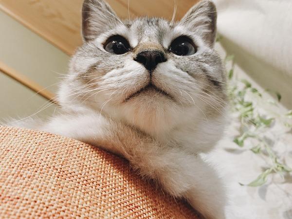 下から見上げた猫の丸い顔