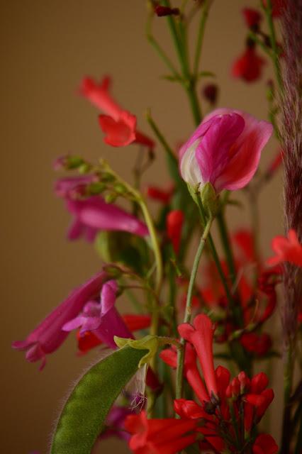 sweet pea, old spice, russelia, penstemon, desert garden, small sunny garden, amy myers, monday vase meme