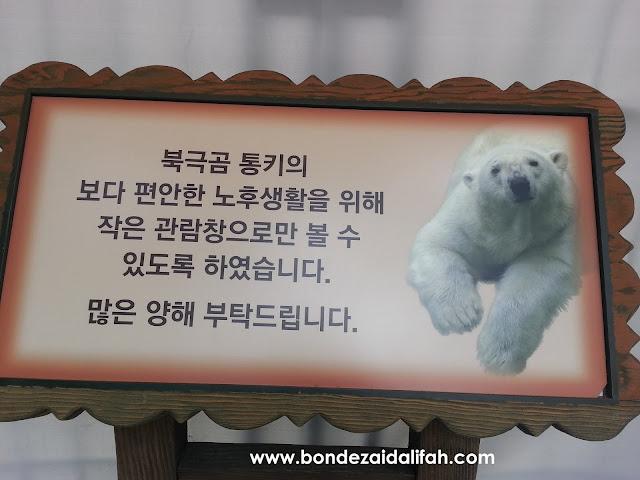 EVERLAND RESORT, EVERLAND THEME PARK, PUSAT HIBURAN TERBESAR DI KOREA, EVERLAND SKY WAY, EVERLAND SKY CRUISE, AUTUM, MUSIM LURUH, MAPLE TREE,