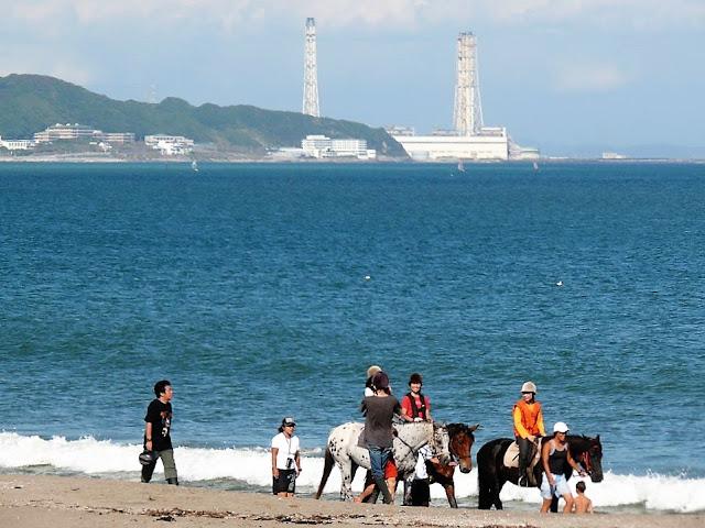 三浦海岸 乗馬
