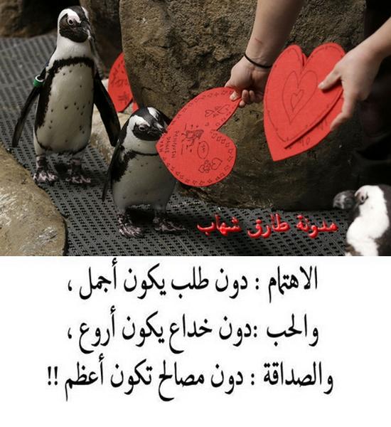 الاهتمام دون طلب يكون اجمل والحب دون خداع يمون اروع والصداقة دون مصالح تكون اعظم